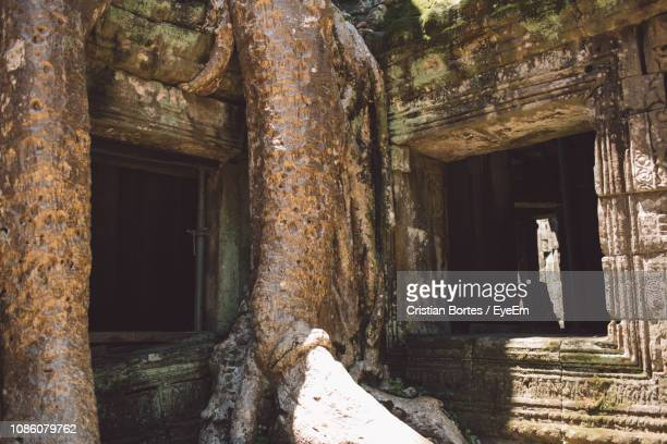 low angle view of tree at old temple - bortes stockfoto's en -beelden