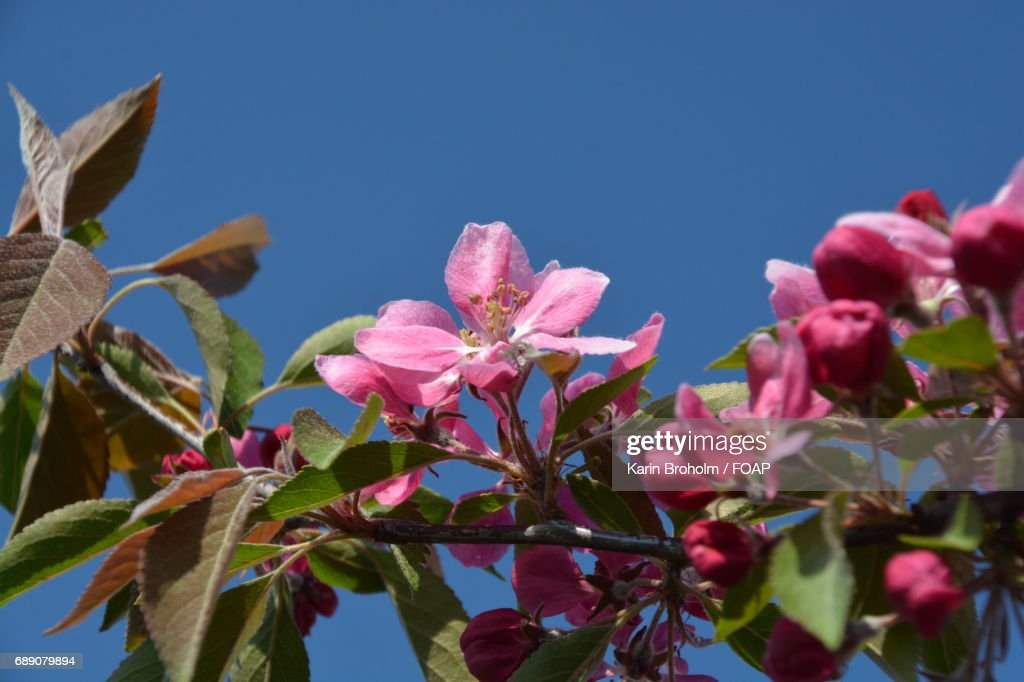 Low angle view of tree branch : Stock Photo