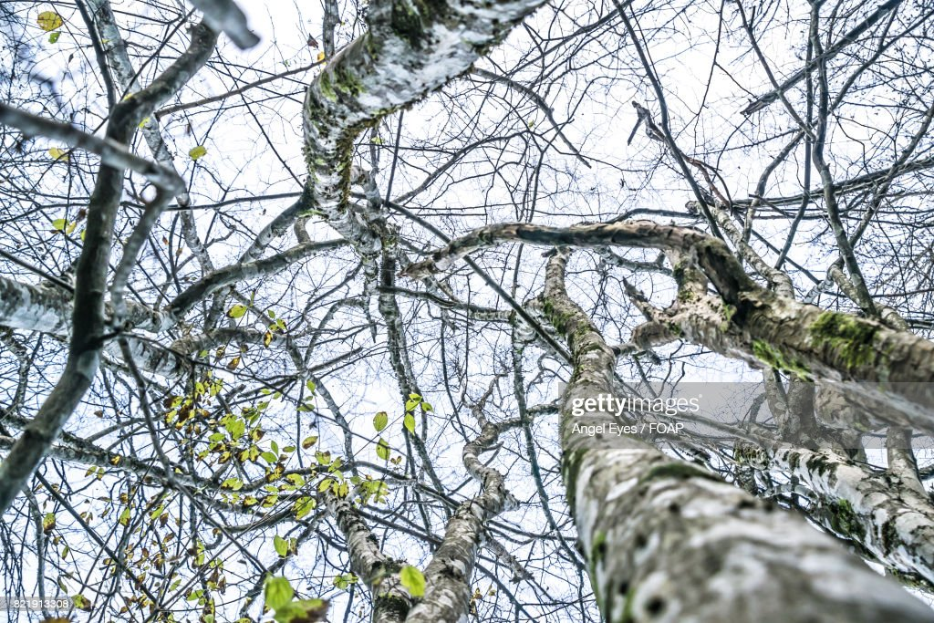 Low angle view of tree branches : Stock Photo