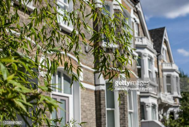 low angle view of tree by building against sky - differential focus stock pictures, royalty-free photos & images