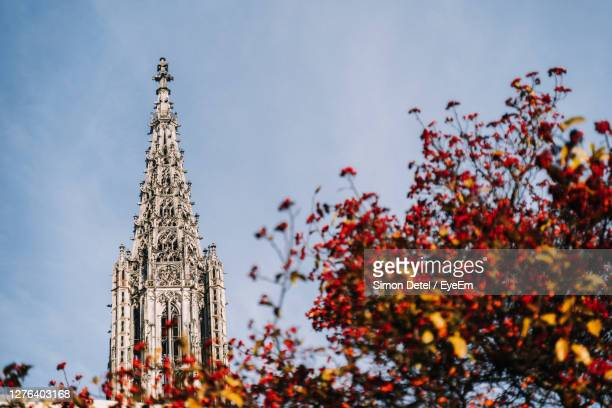 low angle view of tree by building against sky - ulm stock pictures, royalty-free photos & images