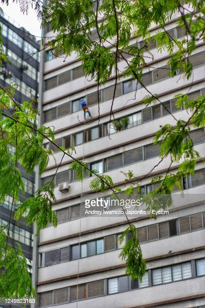 low angle view of tree by building - japonês stock pictures, royalty-free photos & images