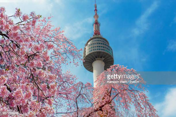 low angle view of tree by tower against sky - seoul stock pictures, royalty-free photos & images