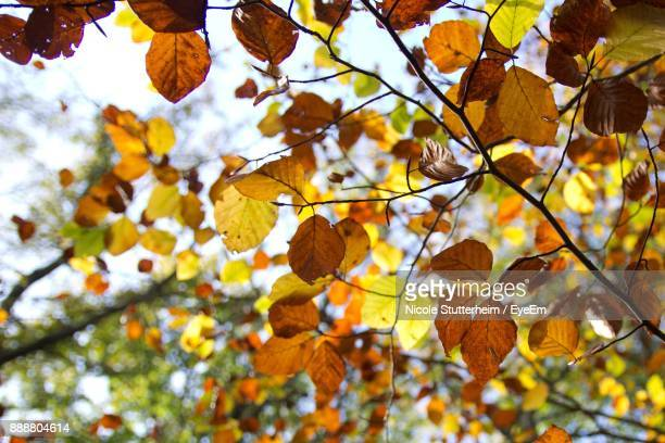 low angle view of tree during autumn - stutterheim stock photos and pictures