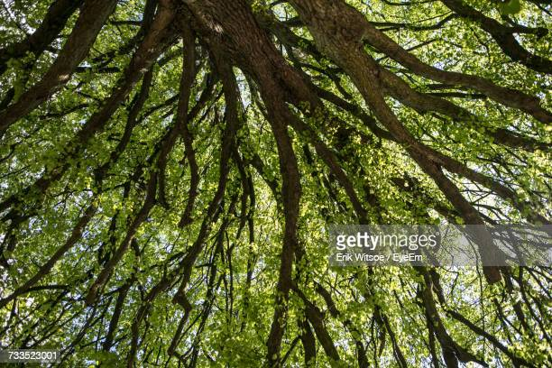 Low Angle View Of Tree Growing At Forest