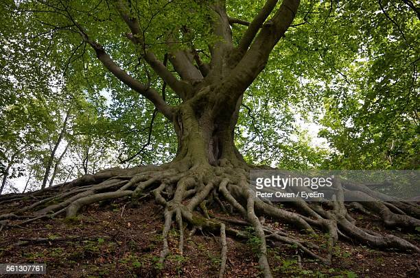 Low Angle View Of Tree Growing In Forest