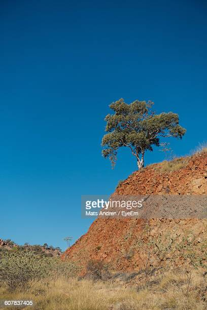 Low Angle View Of Tree Growing On Cliff Against Clear Blue Sky