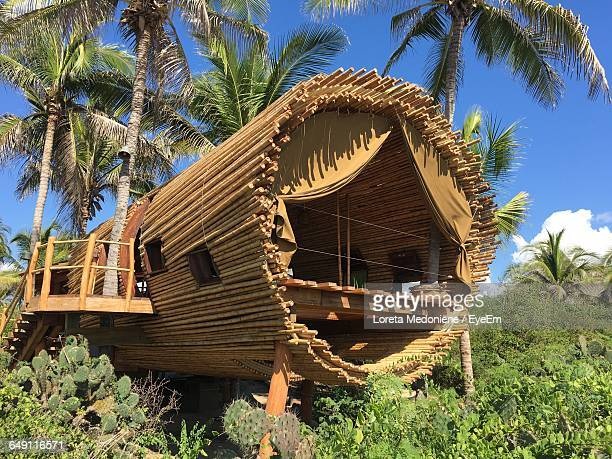 low angle view of tree house by palm trees - tree house stock pictures, royalty-free photos & images