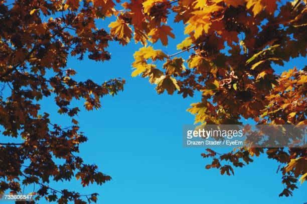 low angle view of tree in autumn - drazen stock pictures, royalty-free photos & images