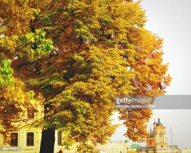 Low Angle View Of Tree In City During Autumn