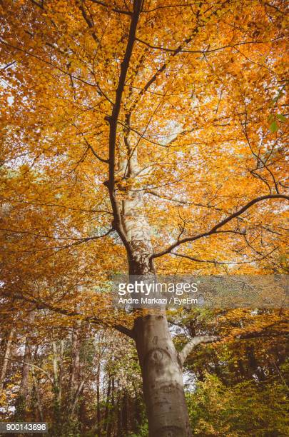 Low Angle View Of Tree In Forest During Autumn