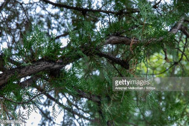 low angle view of tree in forest - melkonian photos et images de collection
