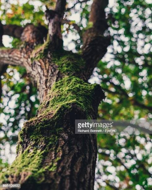 low angle view of tree in forest - berkshire england stock pictures, royalty-free photos & images