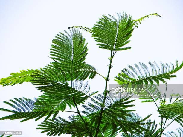 low angle view of tree leaves against sky - palm branch stock pictures, royalty-free photos & images