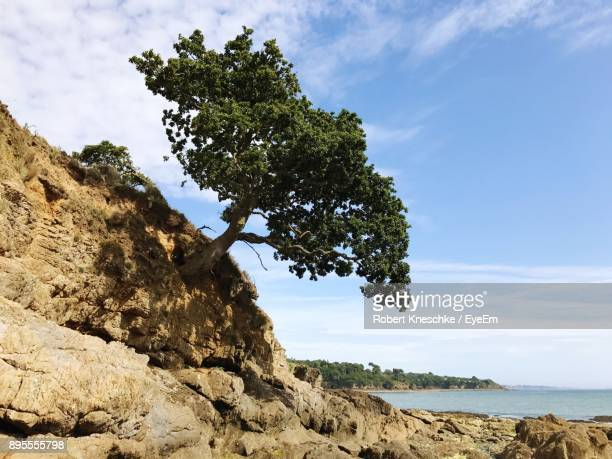 low angle view of tree on cliff against sky - concarneau stock-fotos und bilder