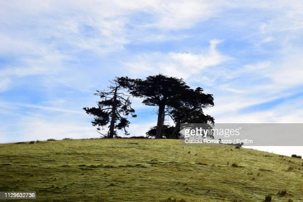 low angle view of tree on field against sky - claudia romanazzo foto e immagini stock