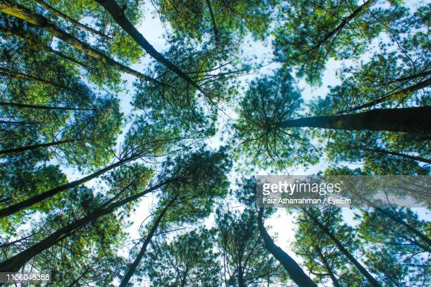 low angle view of tree - tall high stock pictures, royalty-free photos & images