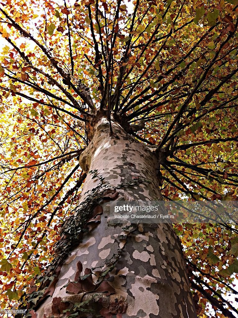 Low Angle View Of Tree : Foto stock