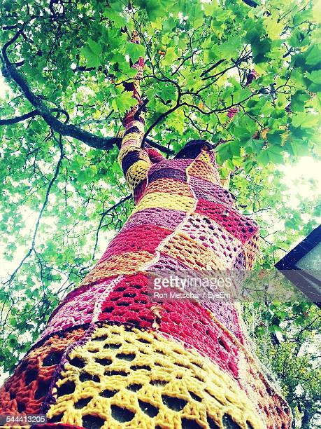 Low Angle View Of Tree Trunk Covered With Knitted Wool