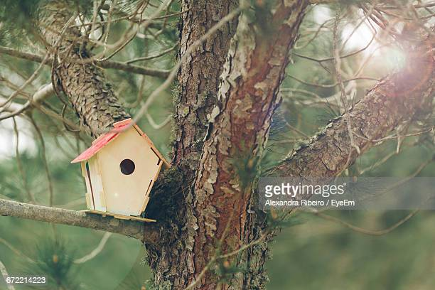 low angle view of tree trunk - birdhouse stock photos and pictures