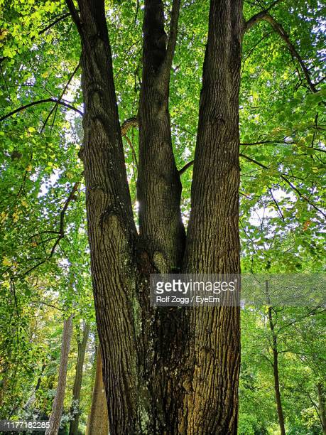 low angle view of tree trunks in forest - sankt poelten stock pictures, royalty-free photos & images