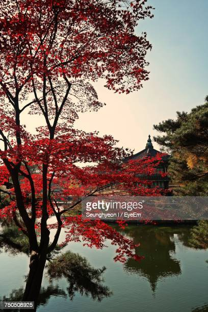 Low Angle View Of Tree With Red Blossom