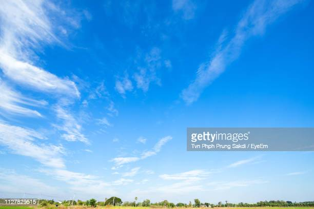 low angle view of trees against blue sky - wispy stock photos and pictures