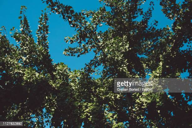 low angle view of trees against blue sky - bortes stock-fotos und bilder