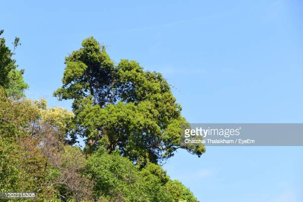 low angle view of trees against blue sky - chatchai thalaikham stock pictures, royalty-free photos & images