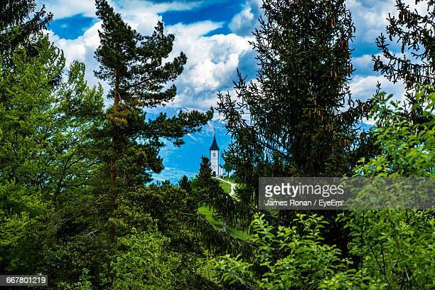 low angle view of trees against blue sky - slovenia foto e immagini stock