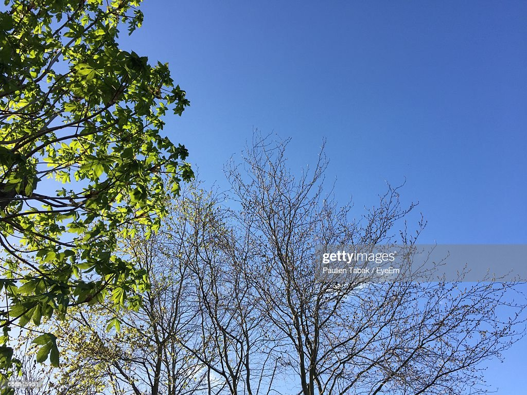 Low Angle View Of Trees Against Blue Sky : Stock Photo