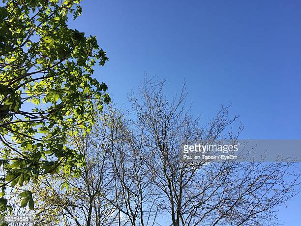 low angle view of trees against blue sky - paulien tabak stock pictures, royalty-free photos & images