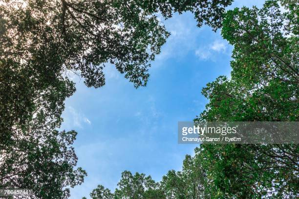 low angle view of trees against blue sky - chanayut stock photos and pictures