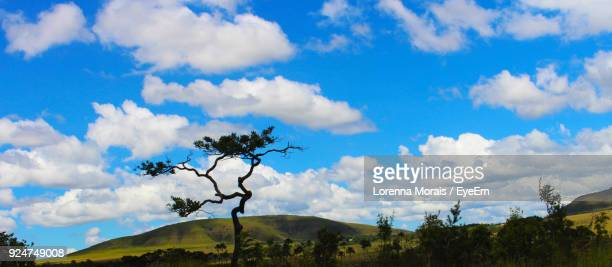 low angle view of trees against blue sky - lorenna morais - fotografias e filmes do acervo