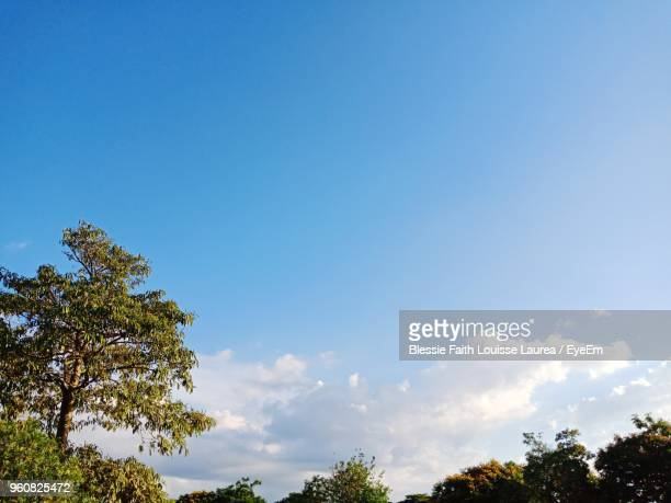 low angle view of trees against blue sky - treetop stock pictures, royalty-free photos & images
