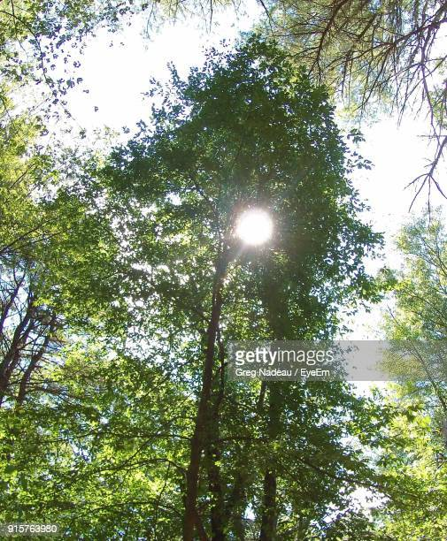 Low Angle View Of Trees Against Bright Sun