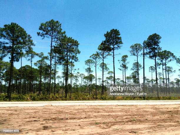Low Angle View Of Trees Against Clear Blue Sky At Beach