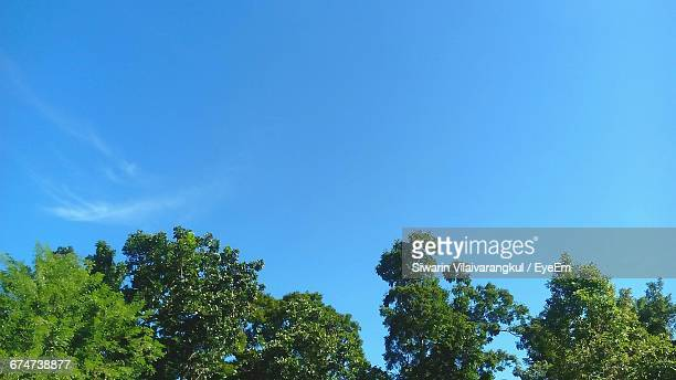 low angle view of trees against clear blue sky - heldere lucht stockfoto's en -beelden