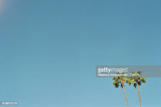 low angle view of trees against clear blue sky - los angeles stock pictures, royalty-free photos & images