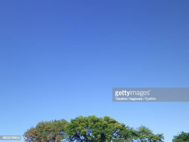 low angle view of trees against clear blue sky - 澄んだ空 ストックフォトと画像