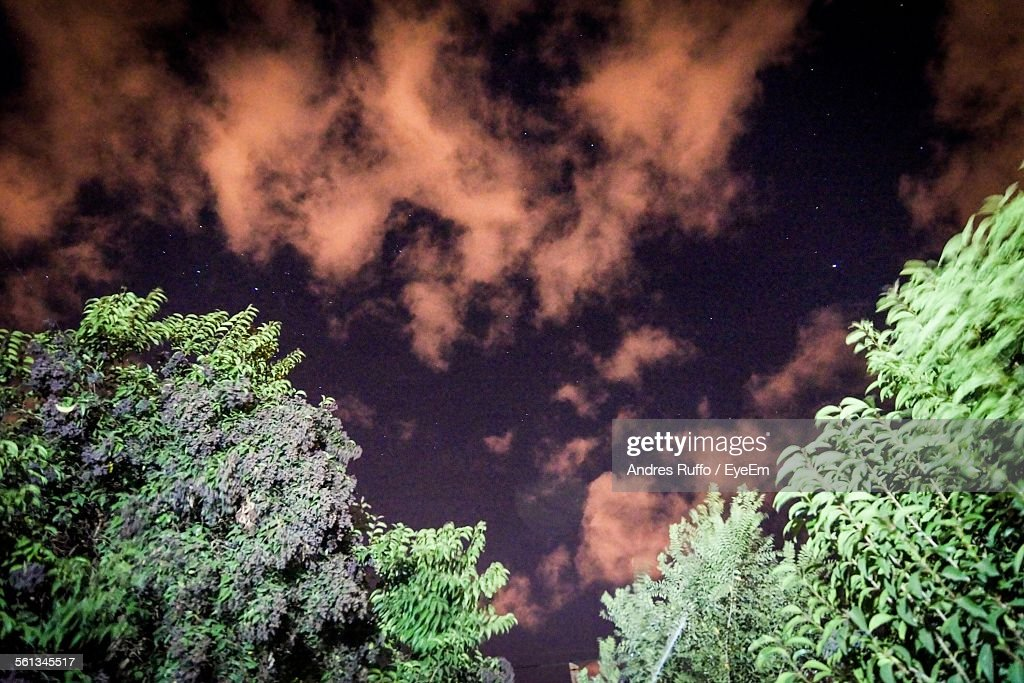Low Angle View Of Trees Against Cloudy Sky At Dusk : Stock Photo