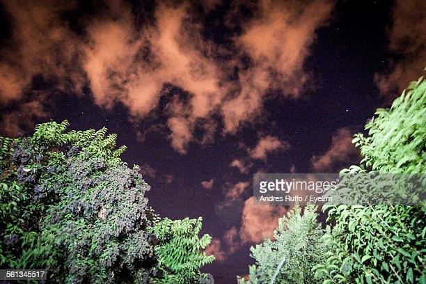 low angle view of trees against cloudy sky at dusk - andres ruffo stock pictures, royalty-free photos & images