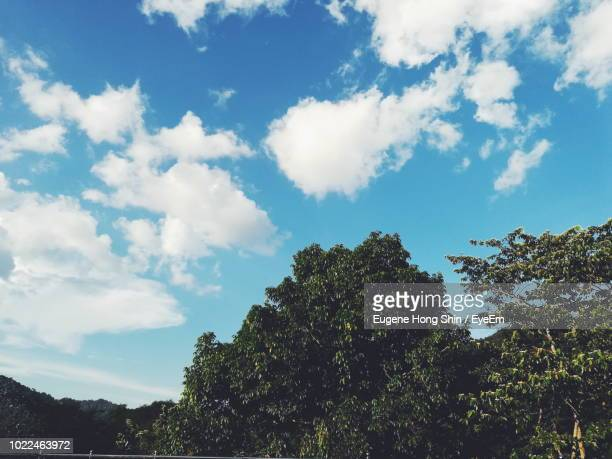 low angle view of trees against cloudy sky - treetop stock photos and pictures