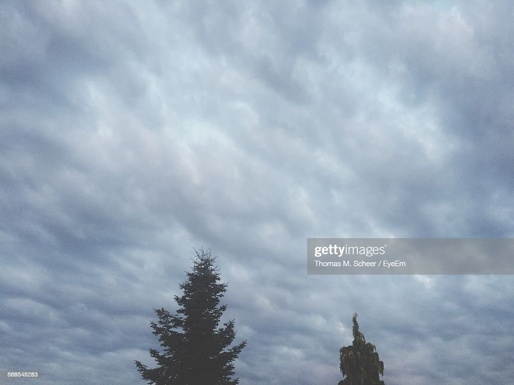 Low Angle View Of Trees Against Cloudy Sky : Stock Photo