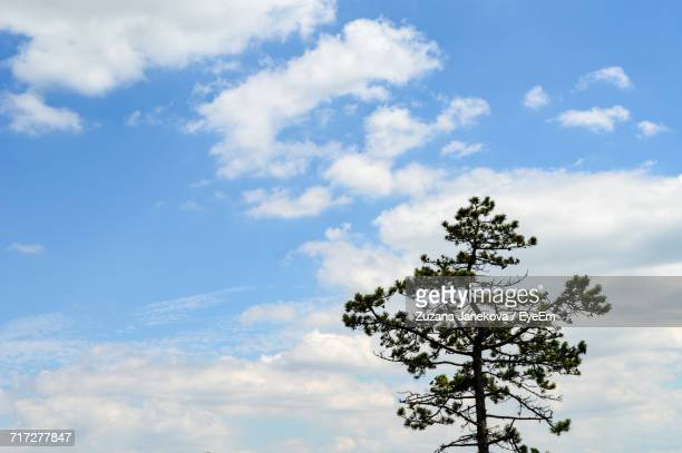 low angle view of trees against cloudy sky - zuzana janekova stock pictures, royalty-free photos & images