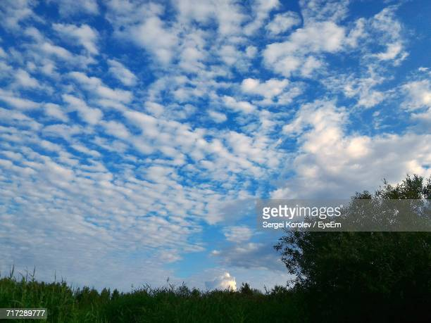 low angle view of trees against cloudy sky - sergei stock pictures, royalty-free photos & images