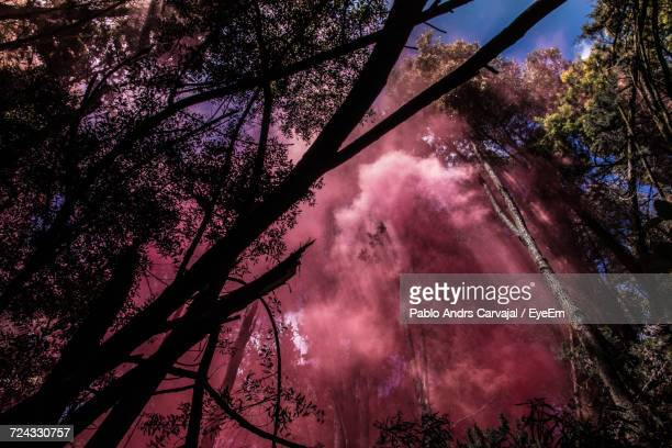 low angle view of trees against cloudy sky - carvajal stock photos and pictures