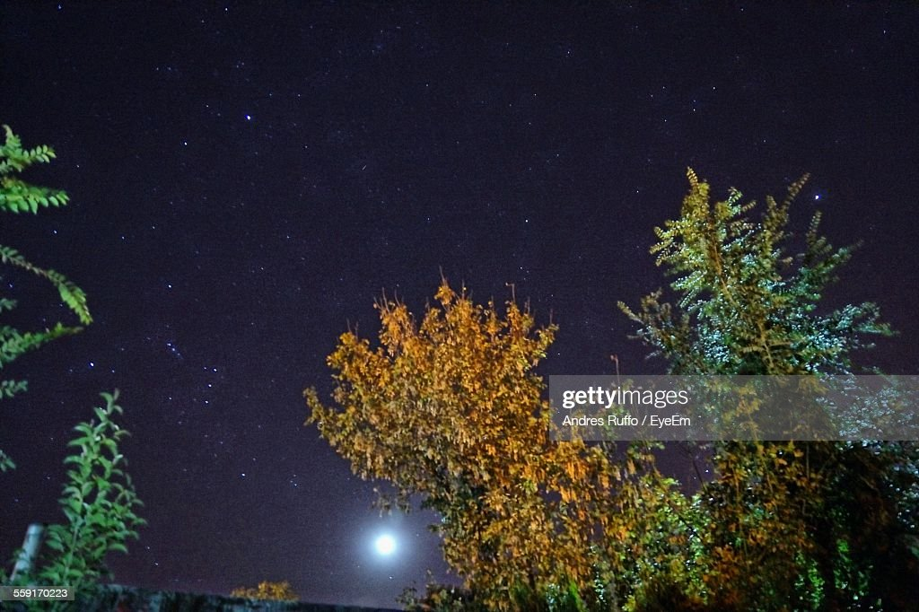 Low Angle View Of Trees Against Sky At Night : Stock Photo