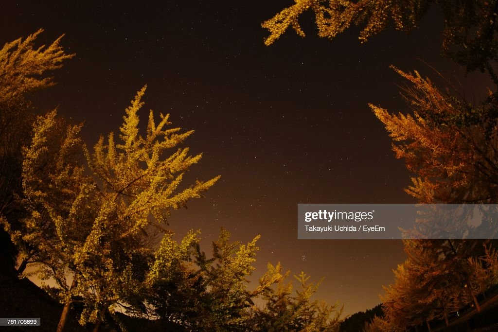 Low Angle View Of Trees Against Sky At Night : Foto de stock