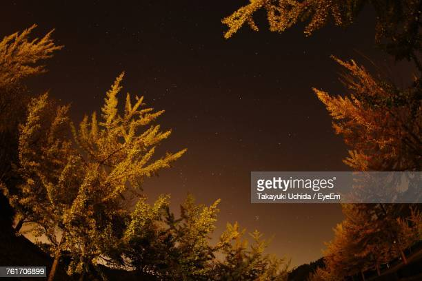 low angle view of trees against sky at night - fukui prefecture - fotografias e filmes do acervo